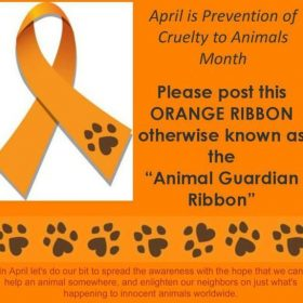 The Reflector: Go orange for animals in April