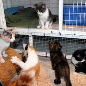 CC Today: Do you love kittens? Then why not become a foster parent.