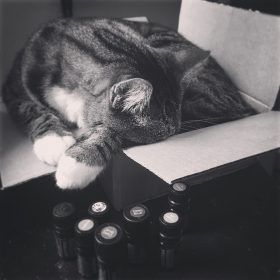 Caution: Cats and Essential Oils