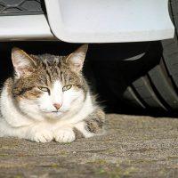 Six Preventable Cat Accidents