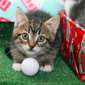 The Reflector:  Cat Rescue to host 'CattyShack' dinner and auction