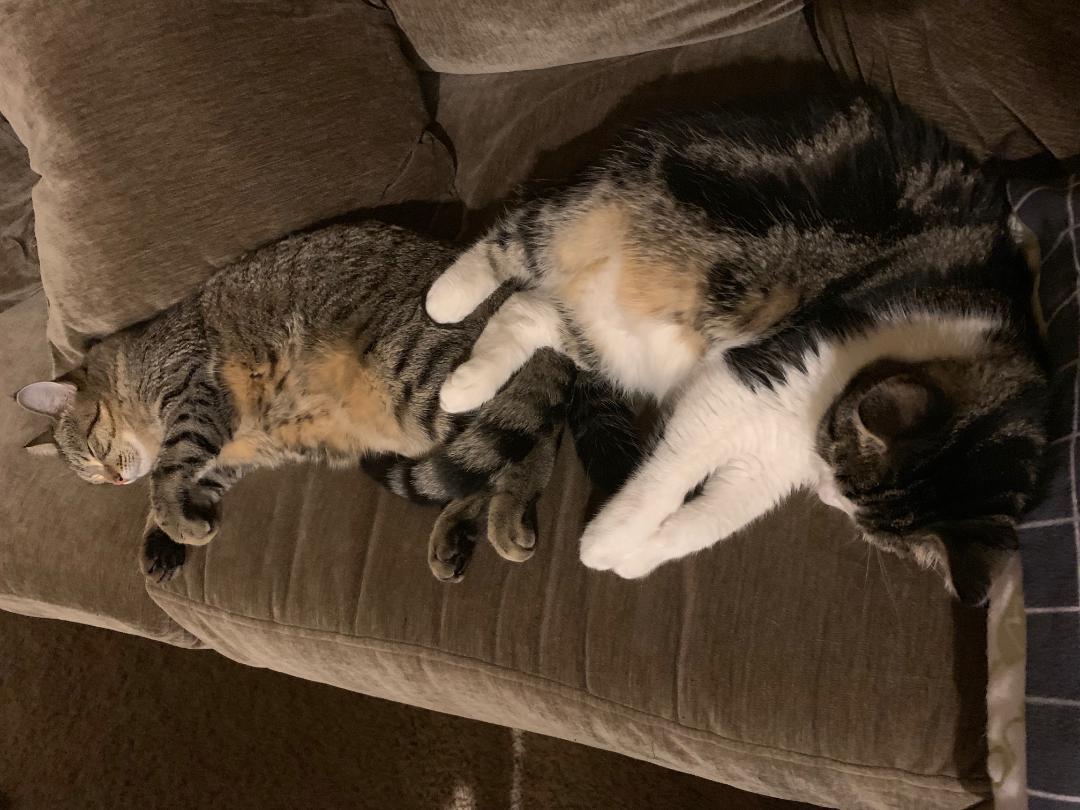 Furry Friends Fur-Ever Tail: Macie Ann and Kylee Madsen