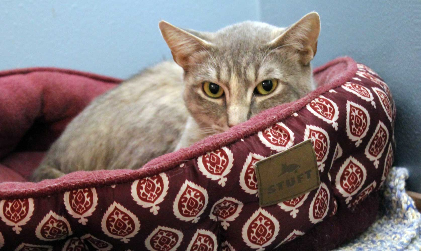 Tiger Lily finds her perfect home