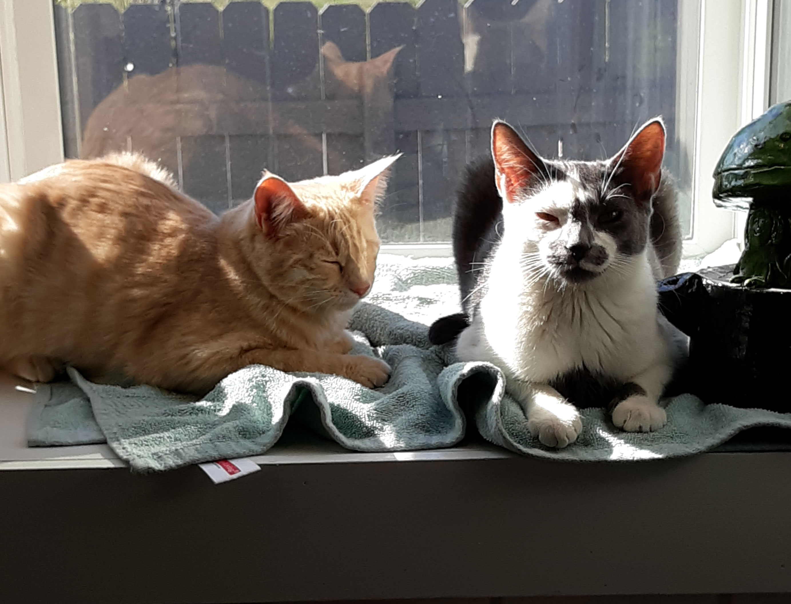 Furry Friends Fur-Ever Tail: Bandit and Cleo and Tyler Wininger