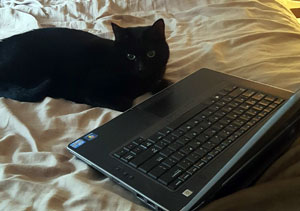 Buttercup sitting on a bed in front of an open laptop