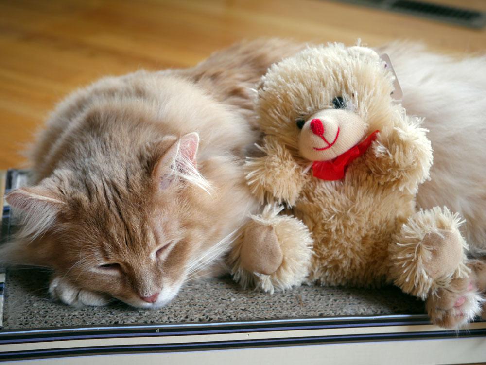 Cassanova laying next to a toy bear