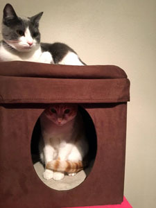 Charlotte and Oliver on the cat tower