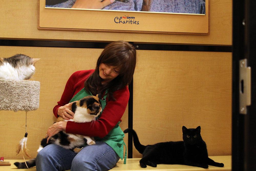 Diane Stevens at PetSmart, petting cats