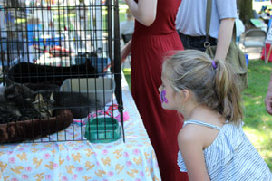 Girl looking at a cat in a cage at the Recycled Arts Festival