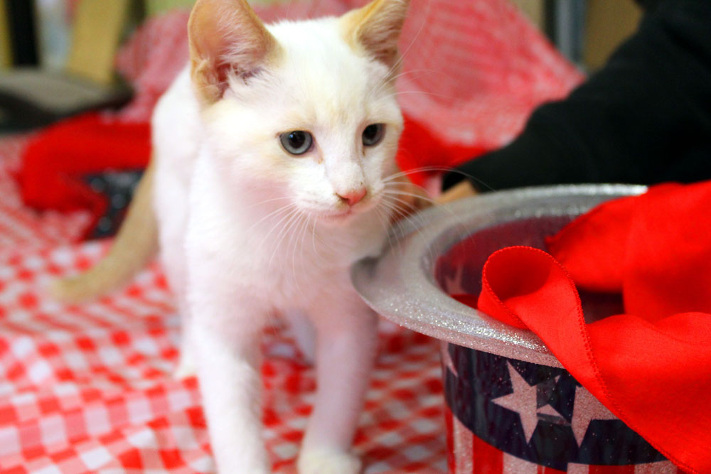 Henry standing in front of a patriotic hat, standing on a red tablecloth