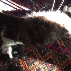 Furry Friends Fur-Ever Tail: Dewie and Keri Scherbring