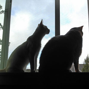 Jack and Zelda sitting side-by-side, looking out the window