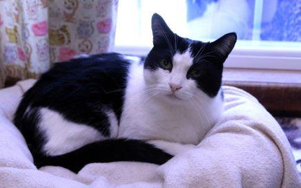 Jojo sitting on the cat bed