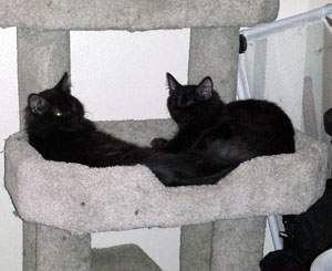 Jonah and Jackson laying next to each other in a cat bed on a cat tower