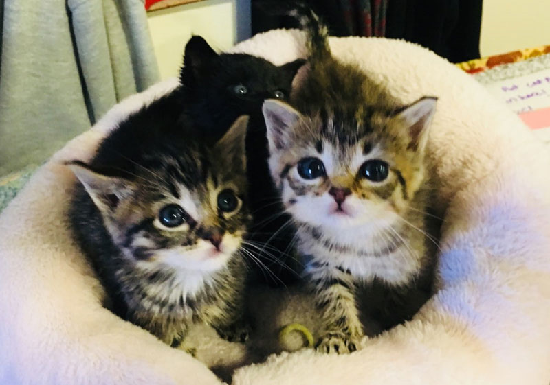 Kitten Buttercup, and Boysenberry in a kitty bed