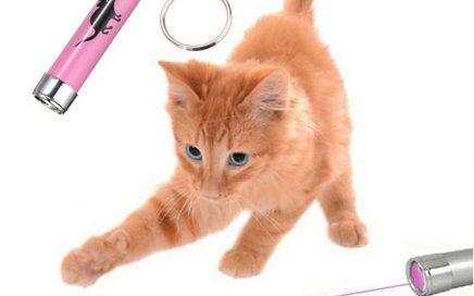 Kitten chasing laser light toy