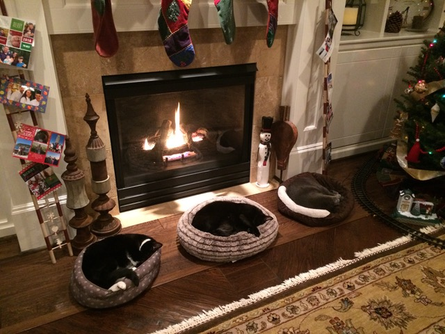Lily, Apollo, and Arrow sleeping in a row in cat beds before a fireplace