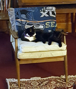 Longshanks Longfellow and Louie Louie sitting on the same chair together
