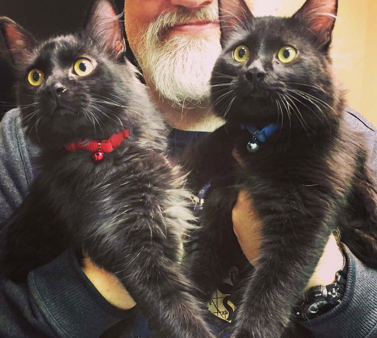Man holding two black cats in his hands