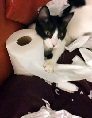 Maxine ripping up toilet paper