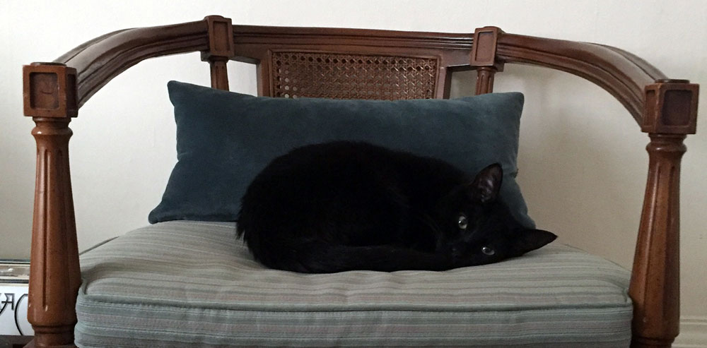 Merlin curled up on the couch