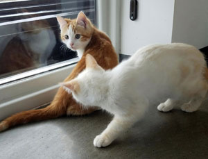 Merry and Pippin chasing flies at the window