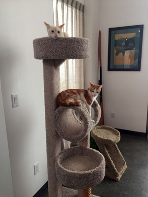 Merry and Pippin sitting on the tri-story cat condo
