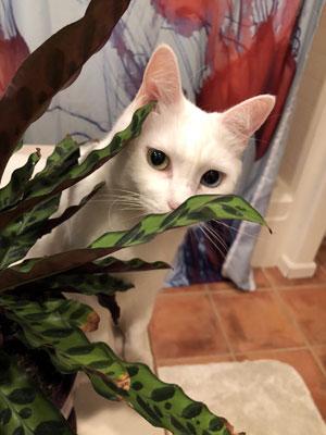 Noah smelling a plant