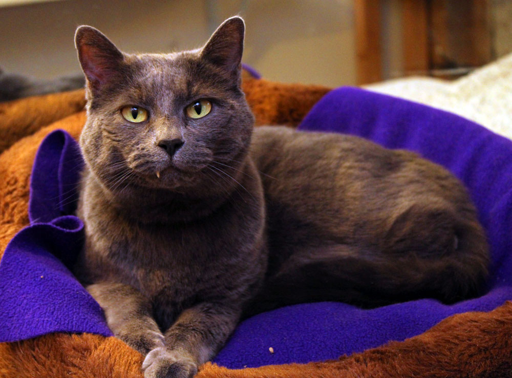 Olivia sitting on a purple blanket bed, with a snaggle tooth showing