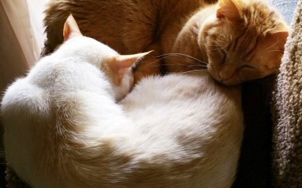 Peetie (Punkin) and Lewis curled around each other, sleeping