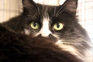 Pistachio closeup with green eyes