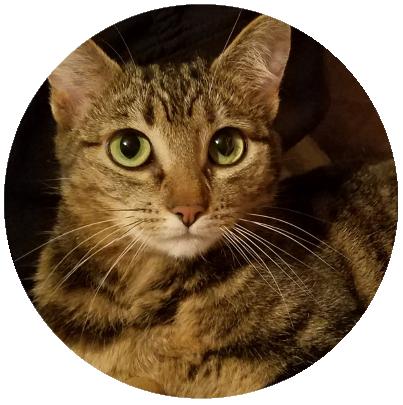 Profile image of Minnie