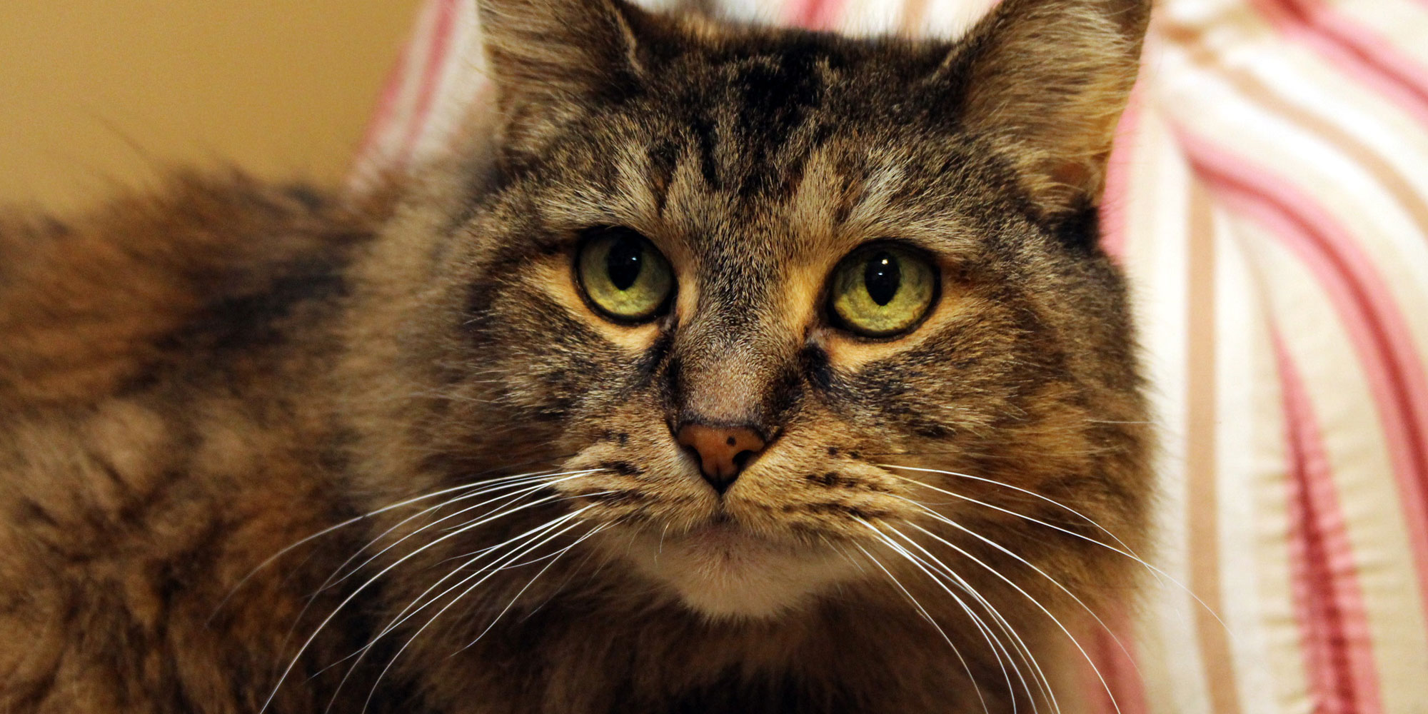 Profile image of the tabby cat Mary Jane