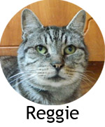 reggie_button
