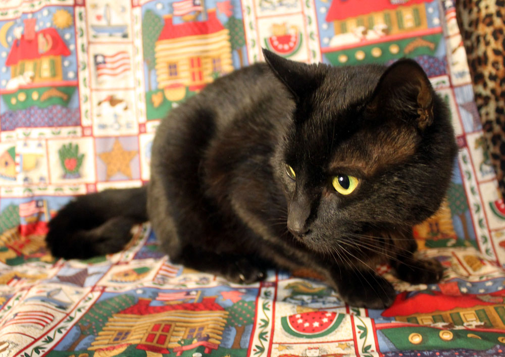 Riley crouched down atop a colorful blanket