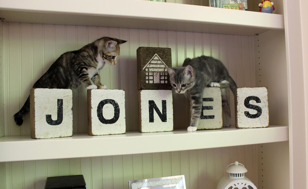 Rosie and Alice on a shelf, stepping over large, white letters that spell JONES