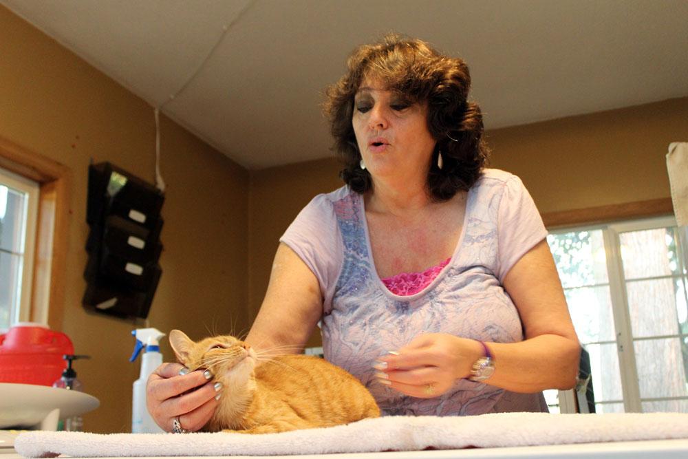 Sandy Bush scratching a cat's chin