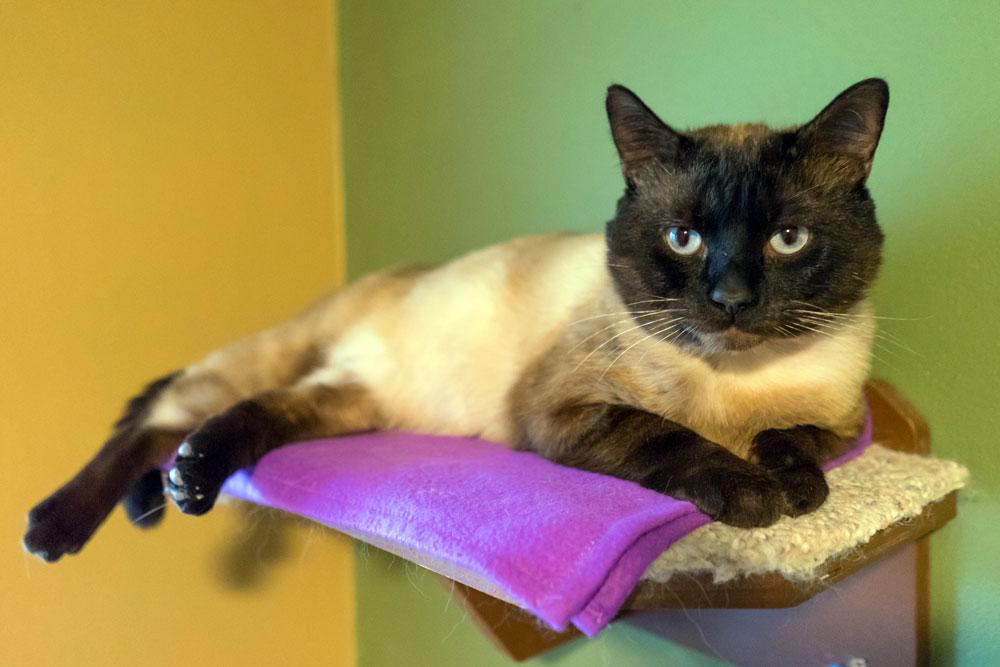 Teal'c lounging atop a cat tower