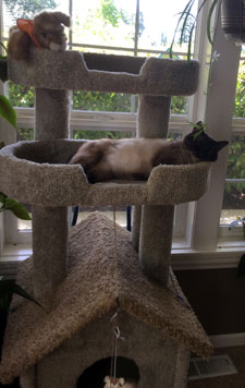 Teal'c sleeping on a cat tower