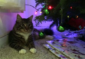 Theodore sitting under, behind the Christmas tree
