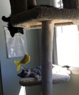 Una and Lada on the cat tower, playing with a toy