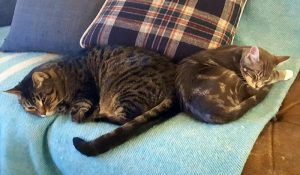 Whiskey and Panko laying side-by-side -on the couch